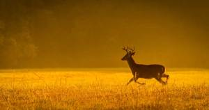 A Guide to New Jersey Wildlife Photography