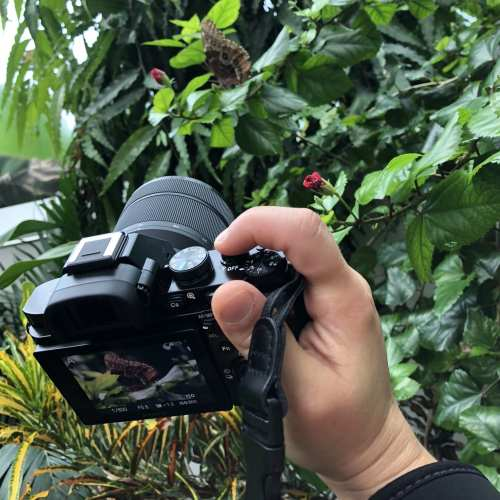 Switching from Mirror to Mirrorless Camera