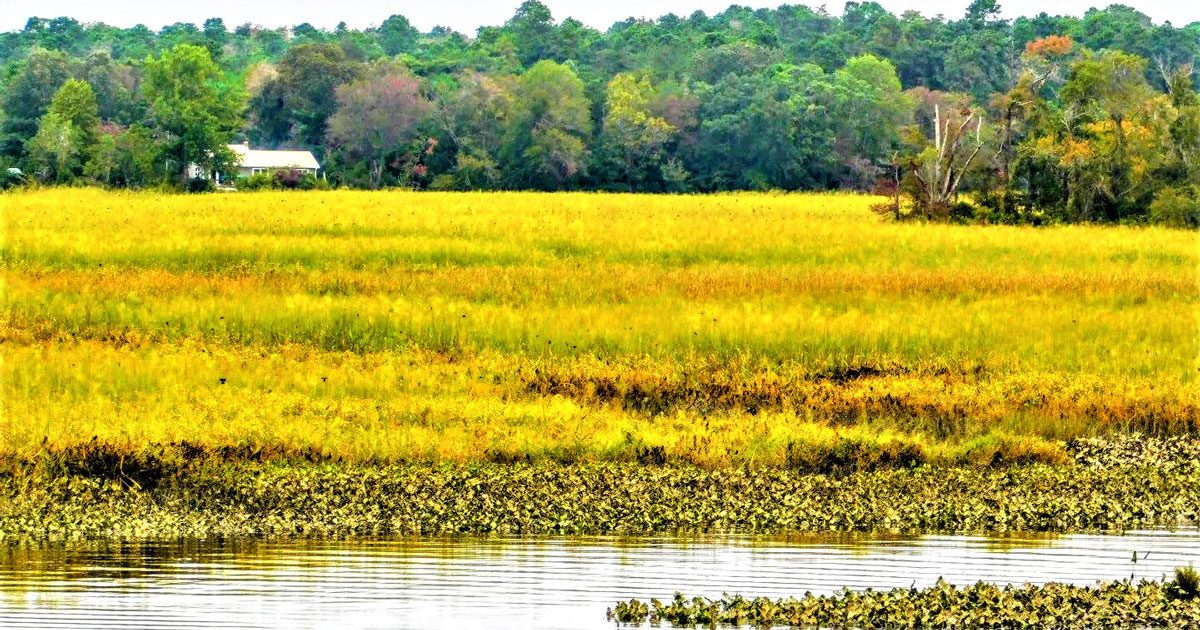 Read more about the article South Jersey's Maurice River Bluffs Preserve