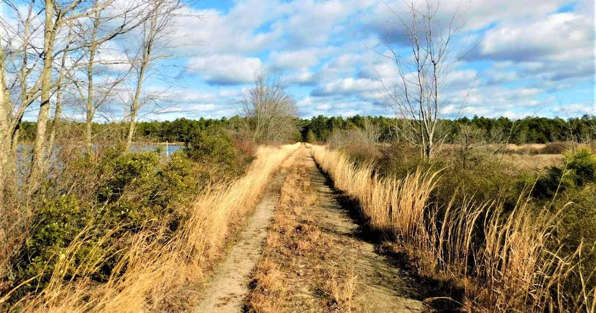 Read more about the article Deep in the Pine Barrens: Franklin Parker Preserve