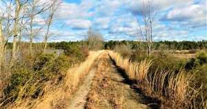 Deep in the Pine Barrens: Franklin Parker Preserve
