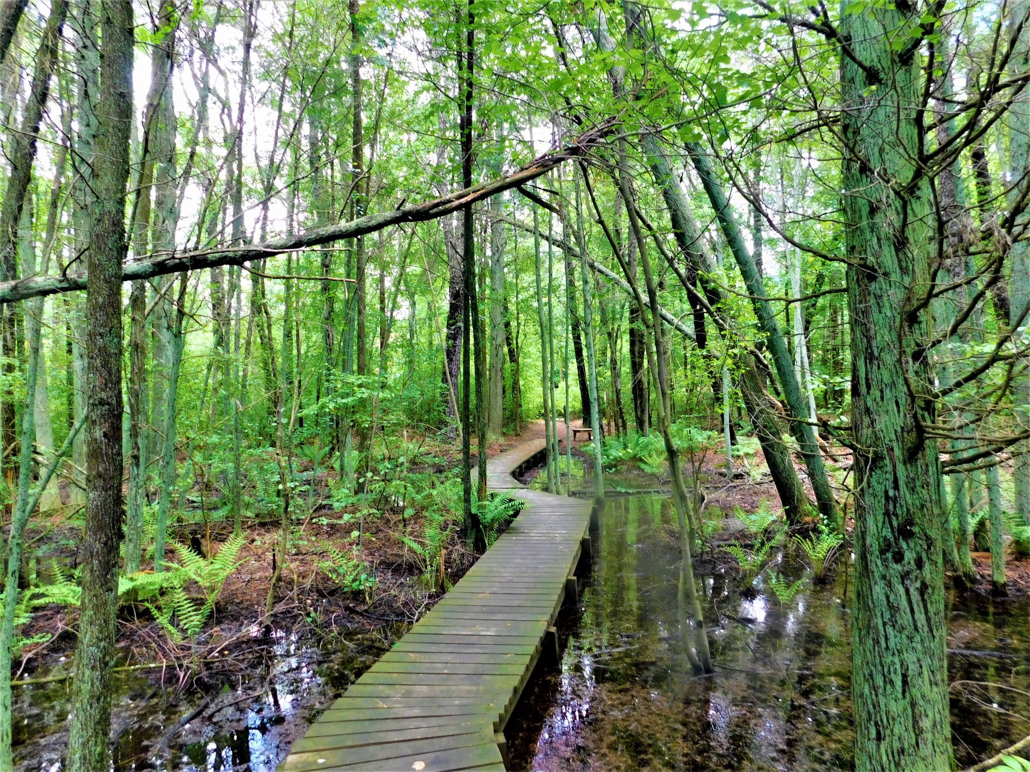 You are currently viewing Exploring Whitesbog Historic Village & Footbridges