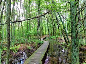 Read more about the article Exploring Whitesbog Historic Village & Footbridges