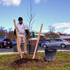 Planting Trees for a Living