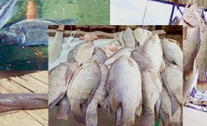 fishing safaris, fishing safari tours , fishing in uganda, lake victoria fishing, Lake Victoria tour