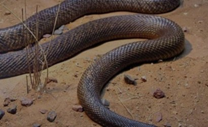 reptile safari tour, one day tours uganda