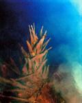 Palm in water - Myakka