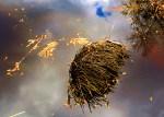 Palm roots in water - Myakka