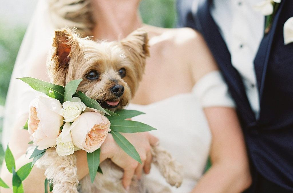 The Dog Days of Weddings- Including Your Pup in Your Nuptials
