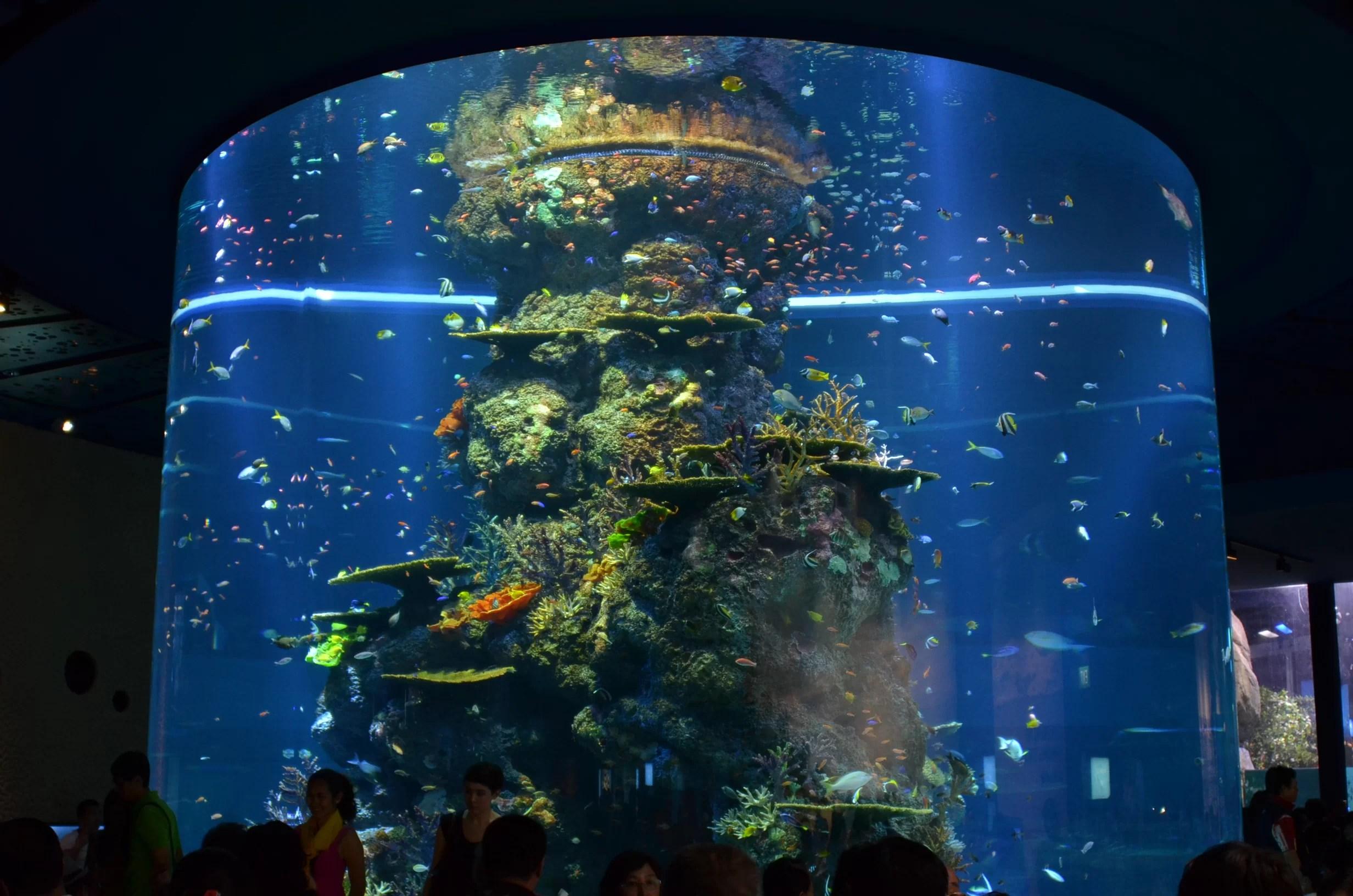 Led Light Aquarium Fish Tank