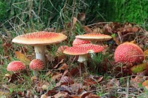 herfst, vliegenzwammen, paddestoelen, herfst dorp, Mariëndaal, Landgoed Mariëndaal, Gelders landschap & kastelen, Arnhem, kleurrijk