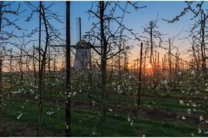 Molen de Marsch te Lienden, perenboomgaard