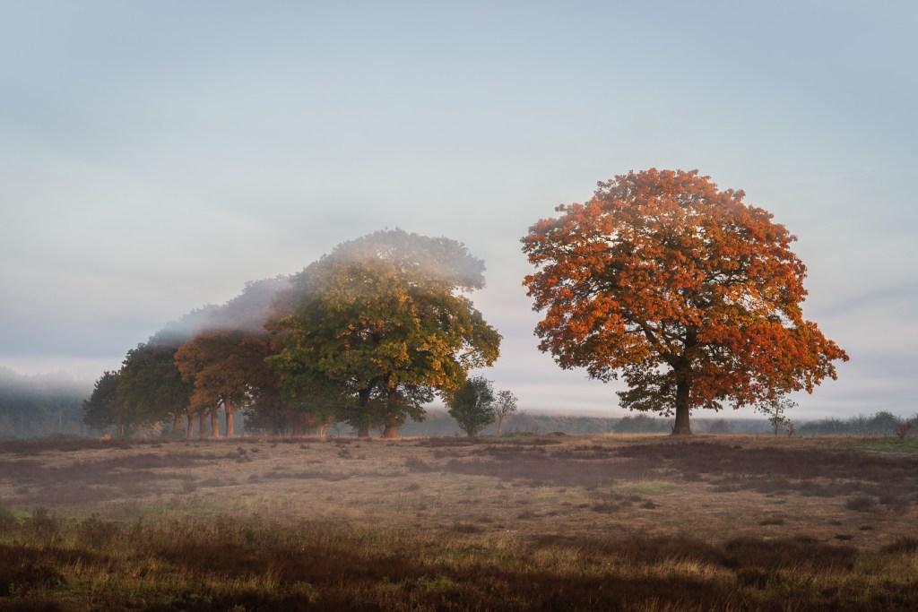 Herfst, Oktober, nldazuu fotografeert, autumn, fall, herfst, Renkum