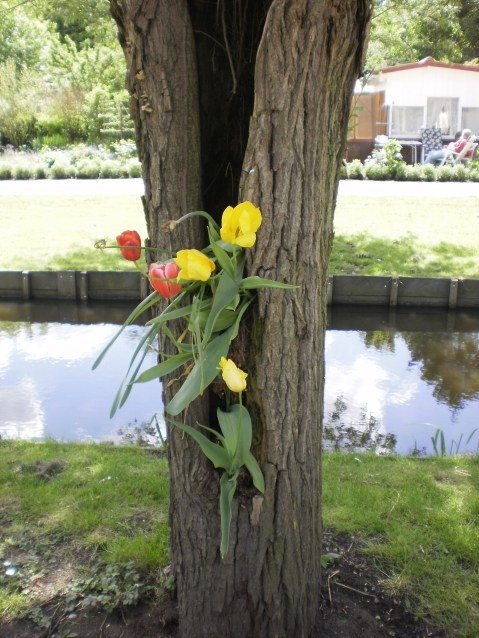 The missing flowerpot