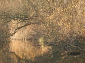 Delta landscape (Almere)