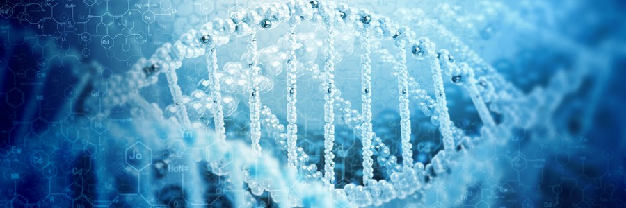 the double helix of DNA