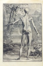 a figure displaying the surface musculature of the back of the body stands akimbo in front of a landscape of hills, a tree and a stone pillar