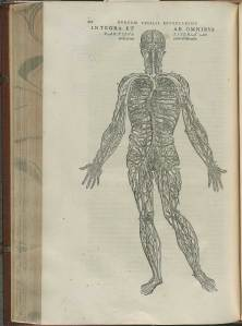 Illustration from Vesalius's De Fabrica showing the circulatory system.