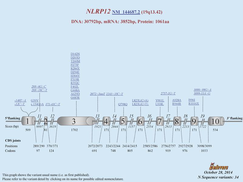 NLRP12 gene