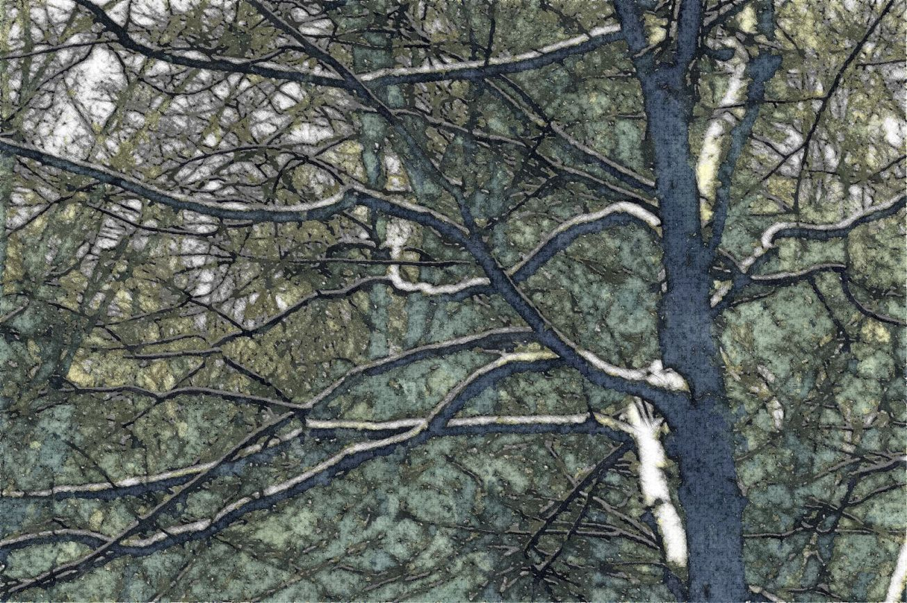 Sketched stark snowy branches d gall