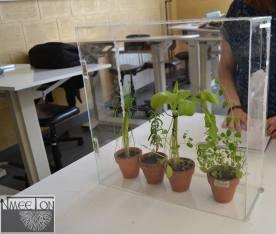 The mini-greenhouse