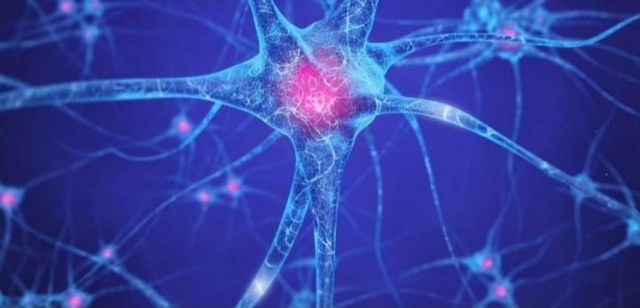 Kontrollimi i qe*lizave ne*rvore me anë të dritës hap rrugë të reja për studimin e trurit