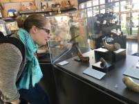 NMSC's Jessica Costello examines powder horns on exhibit at Willett Center.
