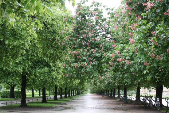 The trees are covered with beautiful pink blooms, and no one was there to enjoy it.