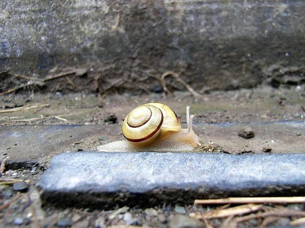 Snail, April 2007.