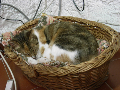 A Cat.  In a Basket.  (Resident cat belonging to the people who rented us our apartment in Riomaggiore.)