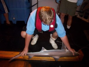 Drew, Scientist, measuring a blacknose shark