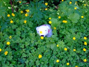 Mbear in the flowers