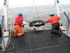 deploying the hoop net