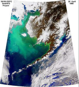 Coccolithophore Bloom 98 Bering Sea