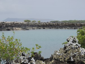 Aa and mangroves at lagoon