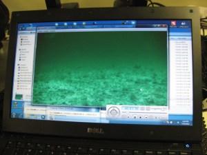 Video captured near fish trap