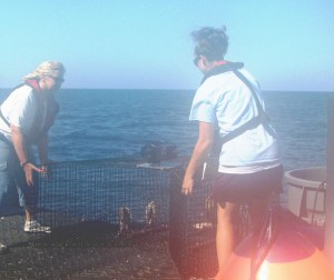 Shelly and me dropping a fish trap from the stern of the R/V Savannah