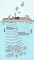 Fishfinding Basics