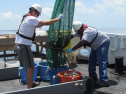 Emptying the trawling net into baskets
