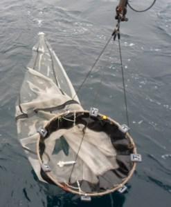 Hoop Net on the winch