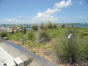 Roof of the Nancy Foster Complex in Key West, Florida. Note the native plants.
