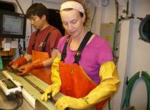 Weighing and measuring the hake is easier with automated scales and length boards.