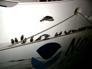 Brown at dock with birds gathering on lines