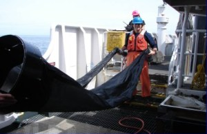 NOAA TAS Scott Donnelly ready to deploy a bongo net