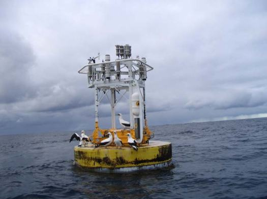 The Stratus 6 Buoy one year after it was deployed.  The nearest Land is 600 miles to the east.  These birds are feeding off the marine life this buoy collects in the waters around the mooring.