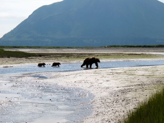 Mama and cubs crossing the river
