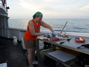 Volunteer Holly Perryman works on removing the jaw from a dead shark.