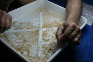 Sorting Zooplankton