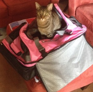 My packing assistant.  I think he wants to come too.