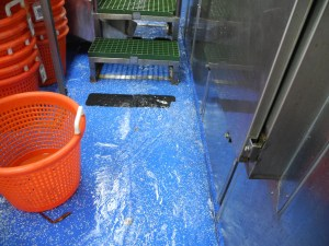 Saltwater helps keep the floor clean in the wet lab.